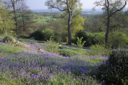 The Bluebell Bank at Emmetts Garden, which still bears the scars of the great storm