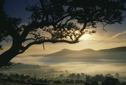 Edale and Lose Hill, Derbyshire, at dawn with the silhouette of a tree against the misty morning sky