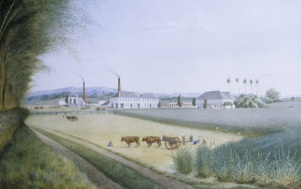 Watercolour of the Denbigh sugar plantation in Jamaica, painted 1871, at Penryh Castle, Bangor, Wales