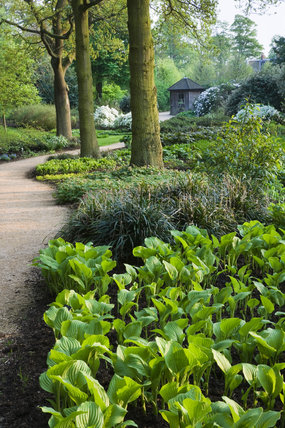 Path winding through the bog garden at Dunham Massey, Cheshire, with young Hostas in the foreground
