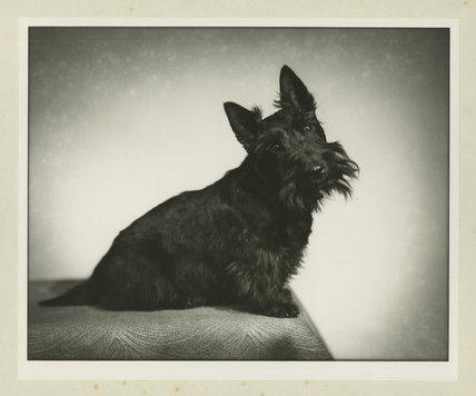 Mrs H. S. Strother's Dog