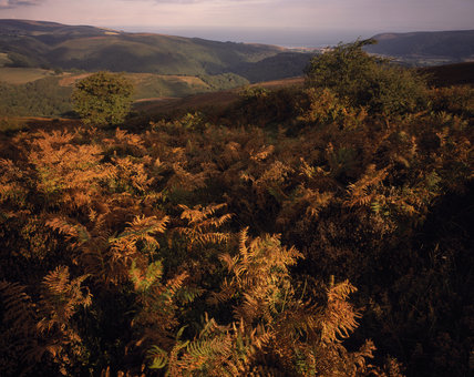 Autumn tinted bracken in Horner Woods & Porlock Bay seen from Dunkery Hill on The Holnicote Estate