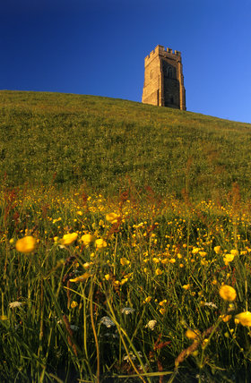 Looking up the steep hillside of Glastonbury Tor in Somerset with its fifteenth century tower at the summit and red and yellow wild flowers in the foregound