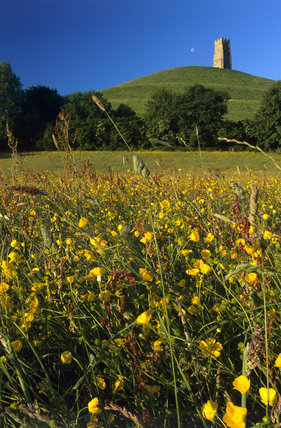 Looking across a field of buttercups to Glastonbury Tor