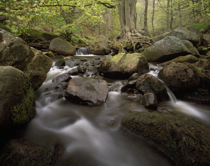 The Burbage Brook in Padley Woods on the Longshaw Estate in the Peak District