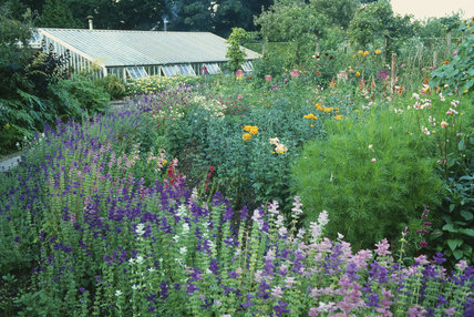 View towards the Greenhouse of the mix of herbaceous flowers, annuals and flowering shrubs in the garden at Gunby Hall