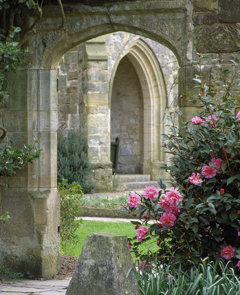 Pink Camellias flowering by a stone doorway at Nymans