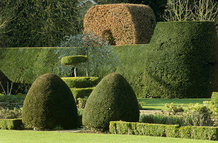 Fine examples of topiary and a shaped yew hedge in the garden of The Courts