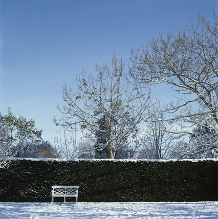 Snowy scene in the garden at Osterley Park showing a path with a garden seat under a hedge and shadows from the trees behind, and a background of snow covered trees