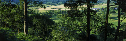 Panoramic view from Alderley Edge with the sun shining on fields in the distance and pine trees in the foreground