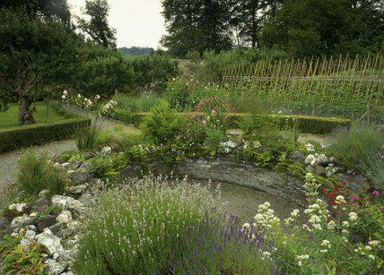The West Walled Garden at Llanerchaeron with lavender in the foreground and runner beans in the background