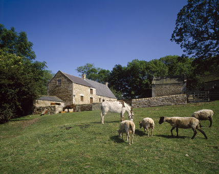 The cottage and farm buildings at Cherryburn, from Tyne Valley