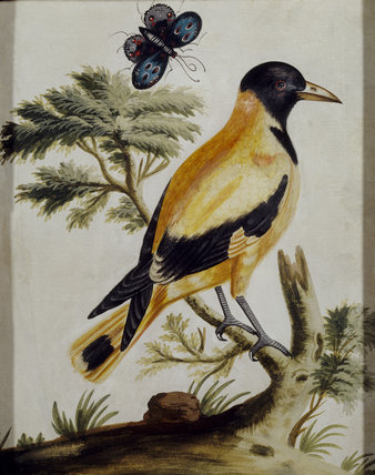 A picture of a bird, hanging in the Porcelain Room at Fenton House, produced by Samuel Dixon (d