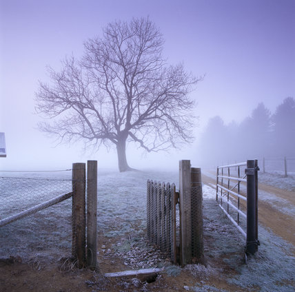 A view of the entrance gate to the burial mound site at Sutton Hoo in winter with a single large tree in the distance