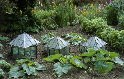 Marrow frames in the vegetable garden at Gunby Hall