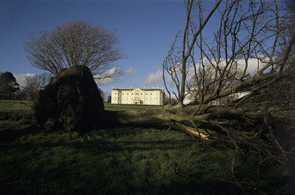 Storm damage at Saltram after the January 1990 storm