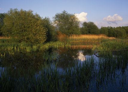 A view of Langham Pond part of the Runnymede water meadow estate
