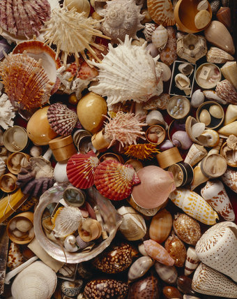 Details of Sir John Harpur Crewe's collection of shells and ocean specimens, located in one of six display cases in the Saloon at Calke Abbey