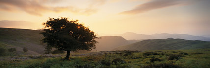 At dawn, a panoramic view of the undulating moorland hills on the Long Mynd at the head of Carding Mill Valley, Shropshire