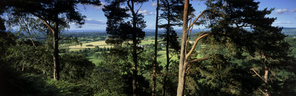 Panoramic view from among trees on Alderley Edge with the summer sun catching the fields spread below in the distance