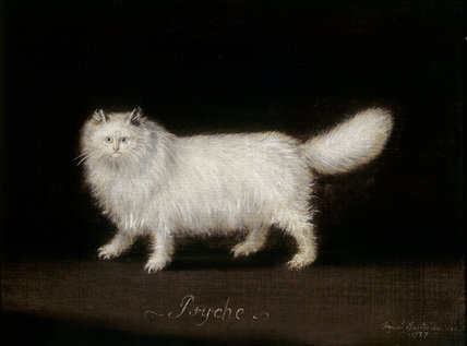 Persian Cat called Psyche, Francis Sartorius (1781)