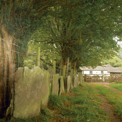 (FL) A path leads to High Yewdale Farm, yew trees and a shard fence run along side