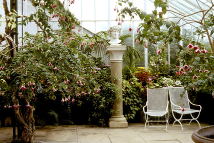 Inside the Conservatory at Wallington