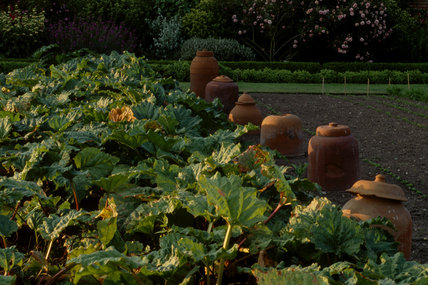Beautiful late afternoon light falling on vegetables at Felbrigg and earthenware forcing pots