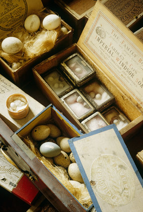 Sir Vauncey Harpur-Crewe's collection of birds' eggs at Calke Abbey