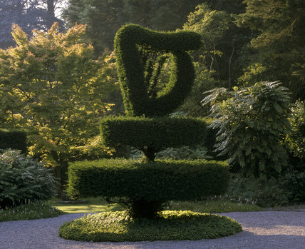 A close view of the topiary Harp in the Shamrock Garden at Mount Stewart