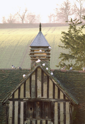 The Dovecote at Ightham Mote, with doves perched on the roof, in early morning