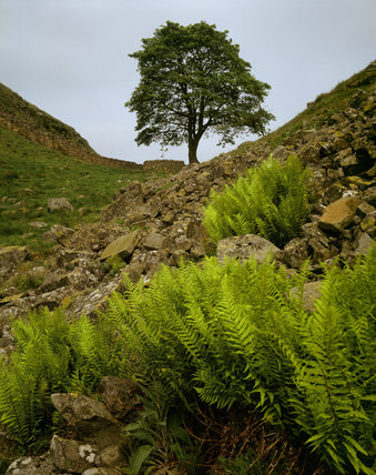 View of the Sylamore Gap near Milecastle at the Hadrian's Wall Estate