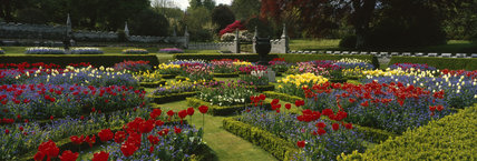 The Parterre at Lanhydrock ablaze with spring flowers including tulips and myosotis (Forget-me-not)