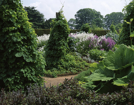 The Herb Garden at Hardwick Hall showing hop tripods and Hesperis Matronalis [Dames Violet] with medicinal rhubarb in the foreground