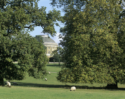 The rotunda at Ickworth House glimpsed through trees in the parkland with sheep grazing