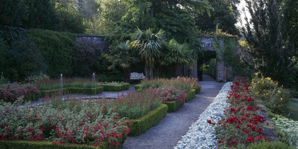 A view of the Walled Garden with late summer bedding of Fuchsia and Penstemone at Penrhyn
