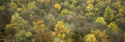 Autumnal view of birch and oak trees at Curbar Edge, Derbyshire, on the Longshaw Estate