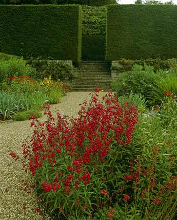 Borders in full bloom at Castle Drogo, next to a gravel path, that leads to some steps and wooden bench, surrounded by shaped hedges