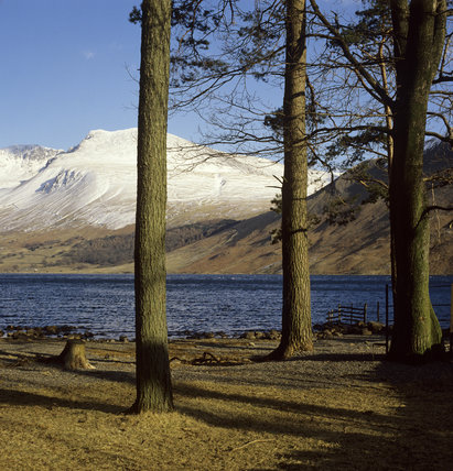 Looking through trees on the lakeside at Wasdale, lake District, snowy fells beyond