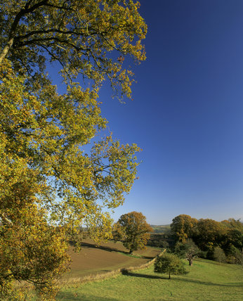 An autumnal view at Brockhampton in Herefordshire, with gold and green leaves in the foreground and a view of ploughed fields and woodland in the distance