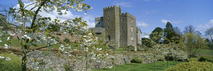 Sizergh Castle, Cumbria, with Shirote Prunus trees in the foreground