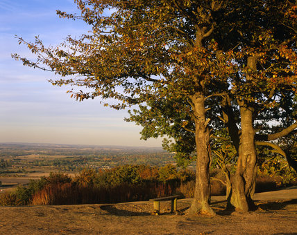 Trees and bench at top of Coombe Hill with view in Autumn