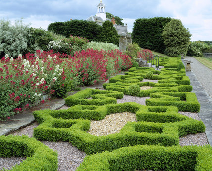An impressive parterre at Morville Hall made up of common Box (Buxus sempervirens) in gravel with banks of Red & White Valerian (Centranthus ruber)