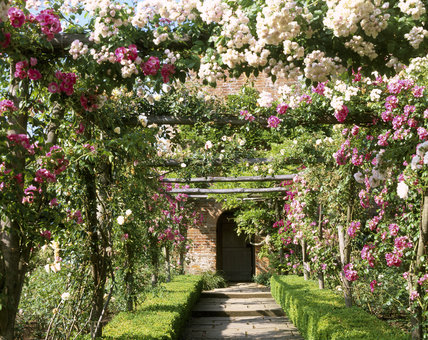 The pergola rose walk in walled garden