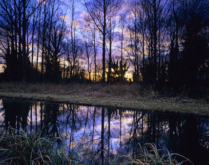 Trres reflected in water at Common Marsh, near Stockbridge, Hampshire, on a winter's evening after a storm