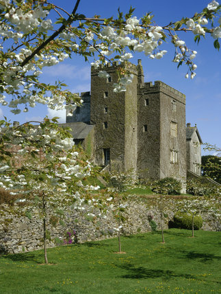The castellated towers of Sizergh Castle, Cumbria, a medieval building with Elizabethan additions is framed by Shirote Prunus blossom