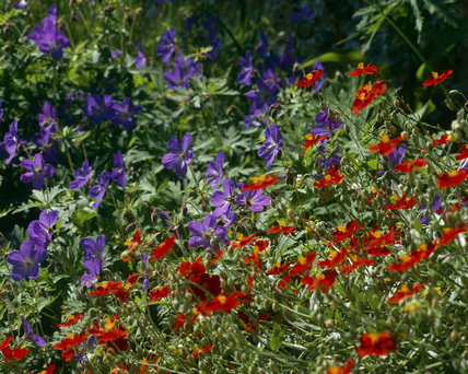 Flower border in the garden at Monk's House, Rodmell, Lewes, home of Virginia Woolf