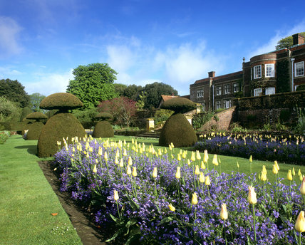 A view of the tulip beds looking towards the house