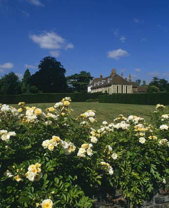 View across garden towards Chapel with yellow roses in foreground