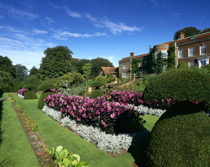 A general view of the beds of pink Dahlia - Fascination at Hinton Ampner Garden